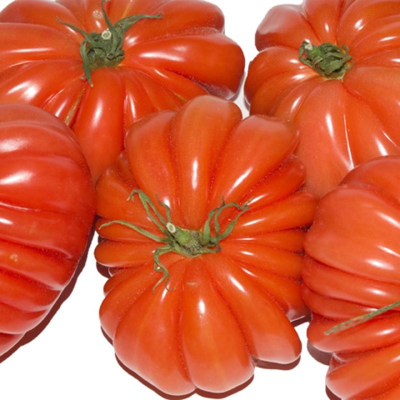 Semillas Orgánicas De Tomate Pomodoro Corazón De Buey
